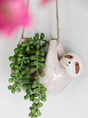 Hanging Sloth Succulent - A'Beautiful Soul