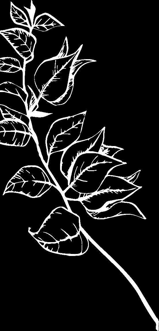 Flower Background image